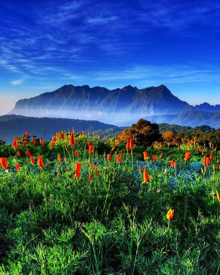 Spring has come to the mountains Thailand Chiang Dao - Obrázkek zdarma pro 480x800