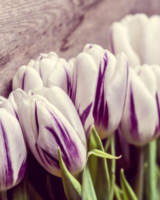 Purple Tulips - Obrázkek zdarma pro Nokia X2-02