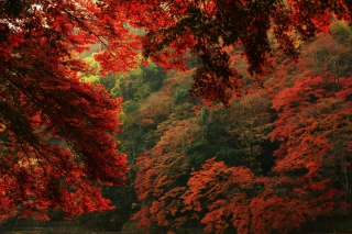 Autumn Forest Picture for Android, iPhone and iPad