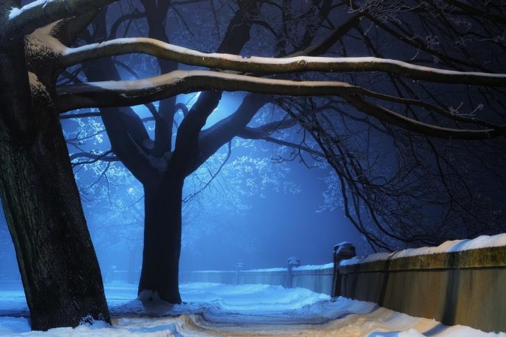 Snowy Night in Forest wallpaper