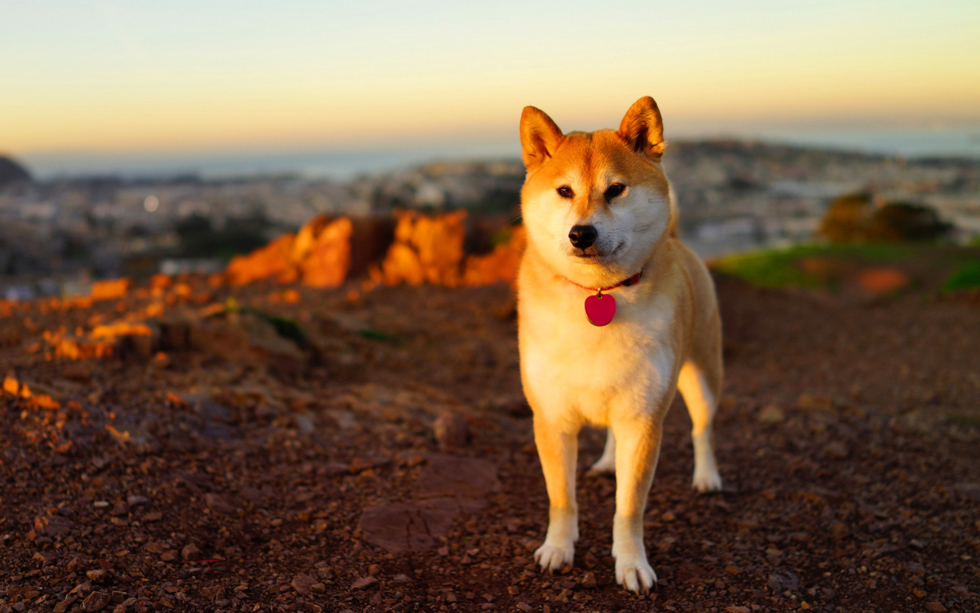 dog hd wallpaper widescreen 1920x1080 - photo #1