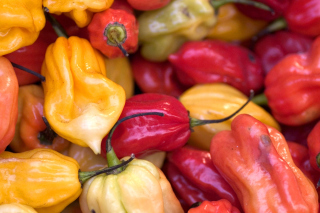 Bell Pepper Background for Android, iPhone and iPad