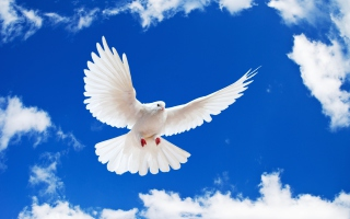 White Dove In Blue Sky Background for Android, iPhone and iPad