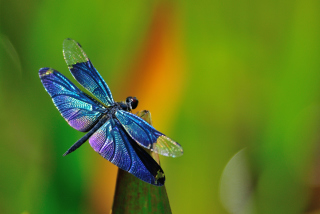 Dragonfly Background for Android, iPhone and iPad