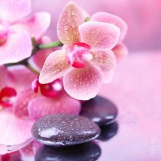 Orchid Spa - Obrázkek zdarma pro iPad