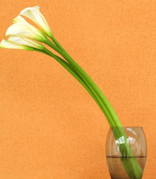 Calla Lily - Obrázkek zdarma pro Nokia X7