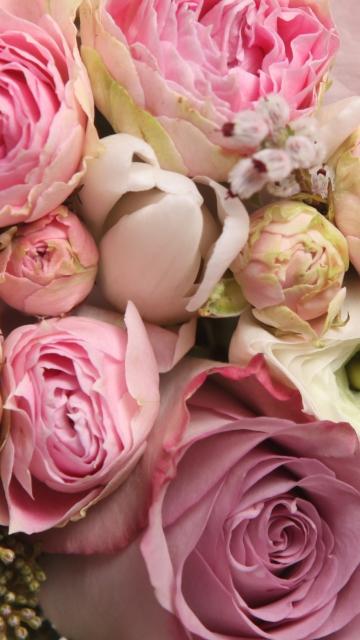 Обои на айфон 6 цветы пионы