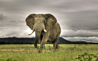 Elephant In National Park South Africa Picture for Android, iPhone and iPad