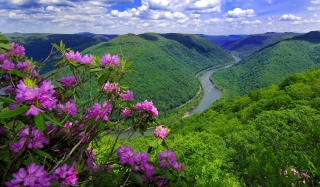 Purple Flowers And Green Hills Picture for Android, iPhone and iPad