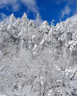 Snowy Winter Forest - Obrázkek zdarma pro Nokia X7