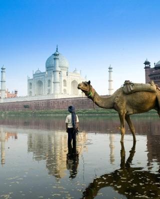 Camel Near Taj Mahal - Obrázkek zdarma pro Nokia Lumia 610