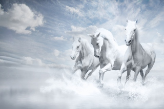 Sky Horses Picture for Android, iPhone and iPad