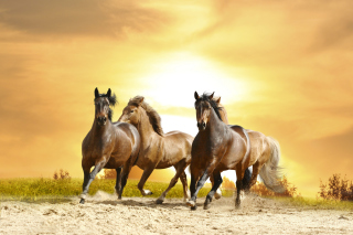 Horse Gait Gallop Background for Android, iPhone and iPad
