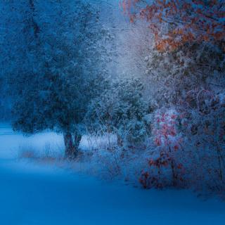 Snowfall in the park - Obrázkek zdarma pro 1024x1024