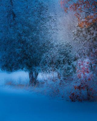 Snowfall in the park - Obrázkek zdarma pro Nokia Asha 203