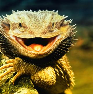 Lizard Dragon - Obrázkek zdarma pro 128x128