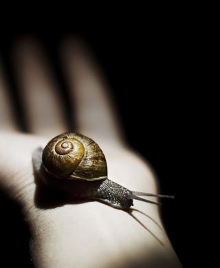Snail On Hand - Obrázkek zdarma pro iPhone 3G