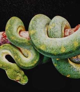 Snake Year - Obrázkek zdarma pro Nokia X1-00