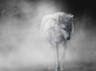 Free Lonely Wolf Picture for Android, iPhone and iPad