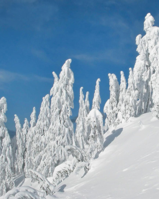 Wintertime - Obrázkek zdarma pro Nokia X3