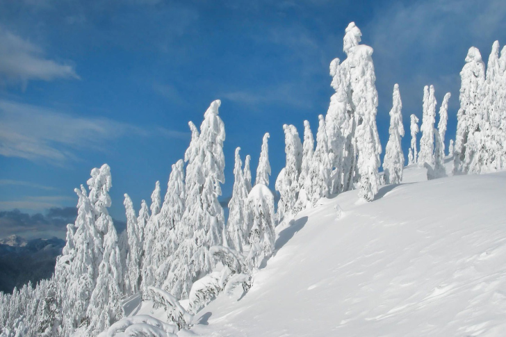Wintertime wallpaper