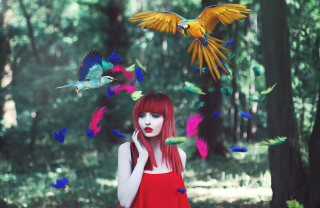 Free Girl, Birds And Feathers Picture for Android, iPhone and iPad