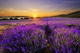 Free Provence Sunrise Picture for Android, iPhone and iPad