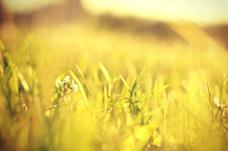 Macro Grass on Meadow Background for Android, iPhone and iPad