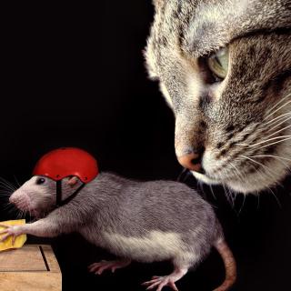 Cat, mouse and mousetrap - Obrázkek zdarma pro 208x208