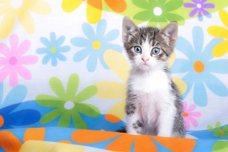 Baby Cat And Flowers Picture for Android, iPhone and iPad