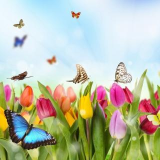 Butterflies and Tulip Field - Obrázkek zdarma pro 208x208