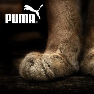 Puma Fluffy Logo - Obrázkek zdarma pro iPad 3