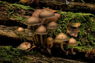 Mushrooms Wallpaper for Android, iPhone and iPad