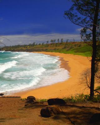 Donkey Beach on Hawaii - Obrázkek zdarma pro 320x480