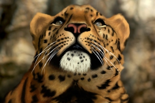 Leopard Art Picture Background for Android, iPhone and iPad
