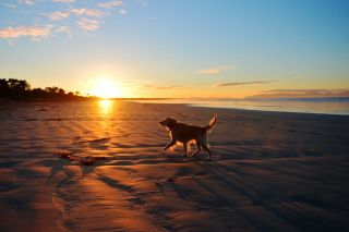 Dog At Sunset Background for Android, iPhone and iPad