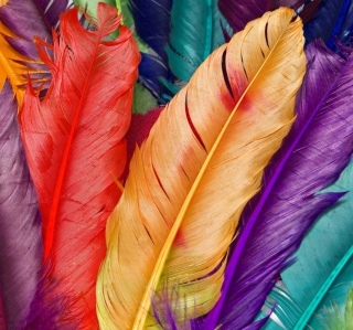 Colored Feathers - Obrázkek zdarma pro 1024x1024