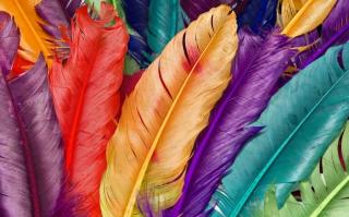 Colored Feathers - Obrázkek zdarma pro 1280x1024