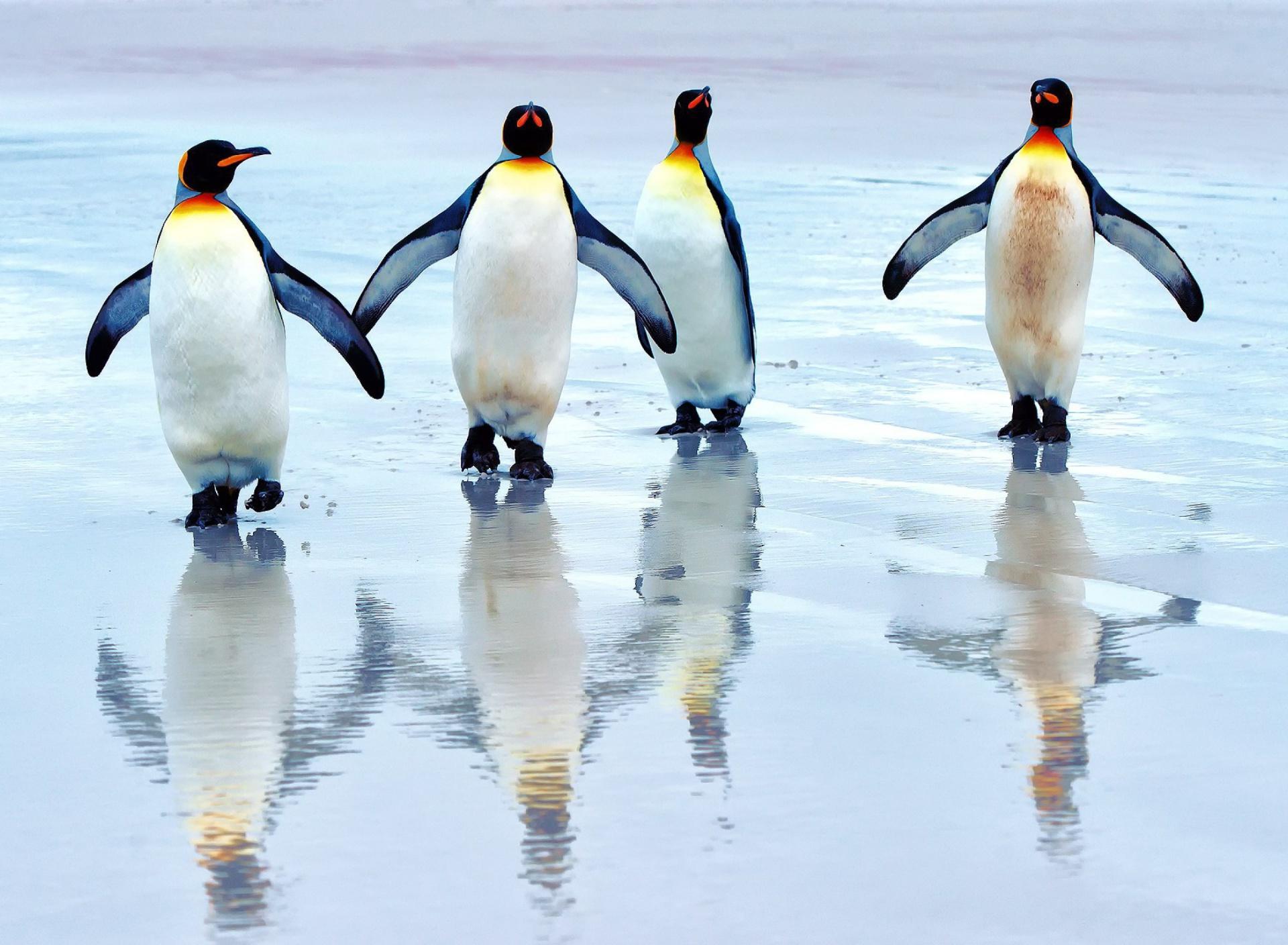 пингвины на глыбе льда  № 91274 загрузить