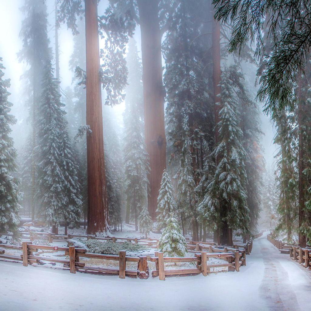 sequoia in winter wallpaper for ipad mini