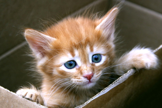 Uber Kittens Wallpaper for Android, iPhone and iPad