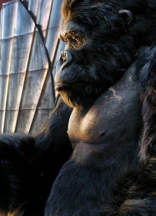 King Kong Film - Obrázkek zdarma pro 480x640