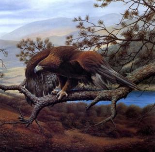 Eagle On Branch - Obrázkek zdarma pro 128x128