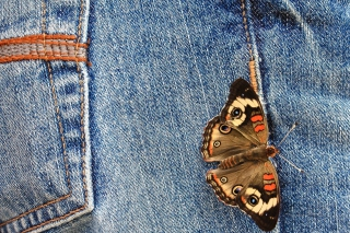 Butterfly Likes Jeans Background for Android, iPhone and iPad