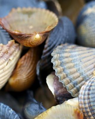 Macro Shells - Obrázkek zdarma pro iPhone 5C