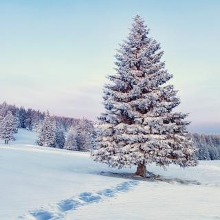 Snowy Forest Winter Scenery - Obrázkek zdarma pro 1024x1024