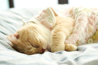 Drowsy Kitten Background for Android, iPhone and iPad