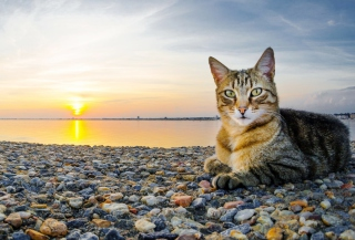 Cat On Beach Background for Android, iPhone and iPad