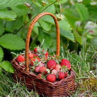 Virginia Strawberry Basket - Obrázkek zdarma pro iPad Air