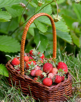 Virginia Strawberry Basket - Obrázkek zdarma pro Nokia C7